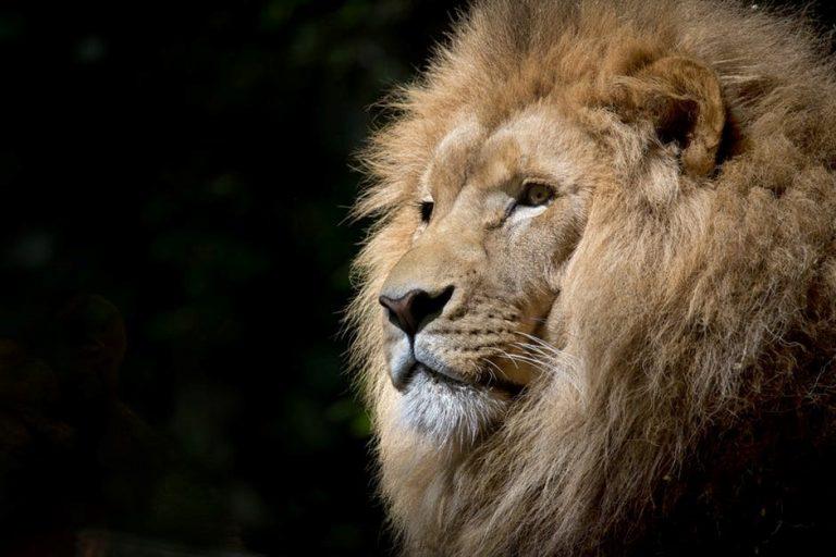 Atlanta Zoo - Intown destination in Grant Park