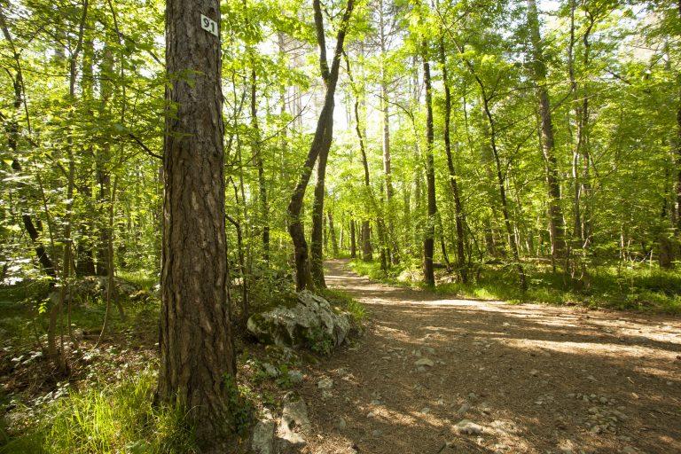 Live near sweetwater creek, walk trails like these